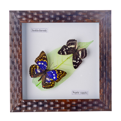 Как сделать бабочку в рамке