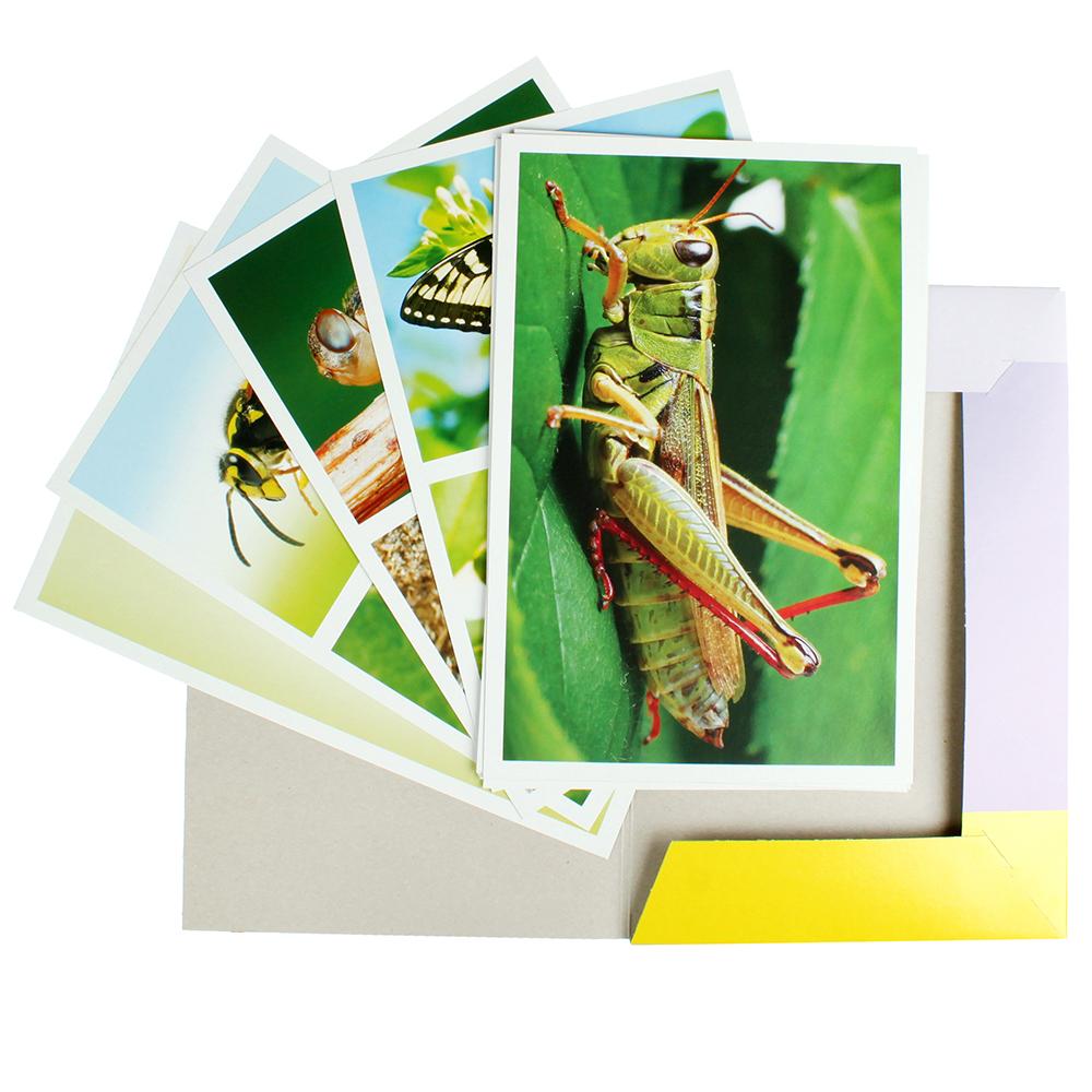 РЫЖИЙ КОТ Пособие дидактическое, формат А4, картон, 20х30см, 10 дизайнов